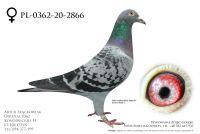 PL-0362-20-2866 - prawdopodobnie samica