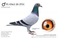 PL-0362-20-2931 - Rondags, Huls, Vandenabeele