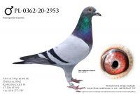 PL-0362-20-2953 - linia Vandenabeele