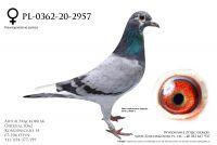 PL-0362-20-2957 - linia Jelle Jellema