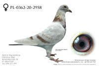 PL-0362-20-2958 - prawdopodobnie samica