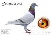 PL-0362-20-2962 - prawdopodobnie samiec