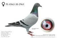 PL-0362-20-2965 - prawdopodobnie samica
