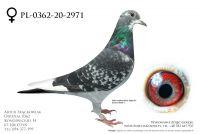PL-0362-20-2971 - prawdopodobnie samica