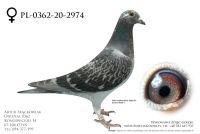 PL-0362-20-2974 - prawdopodobnie samica