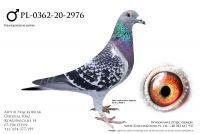 PL-0362-20-2976 - linia Adonisa