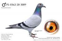 PL-0362-20-3009 - pradziadek wylatał 11x1k