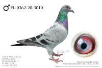 PL-0362-20-3010 - prawdopodobnie samiec