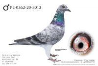 PL-0362-20-3012 - prawdopodobnie samiec