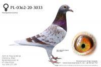 PL-0362-20-3033 - 520, Kleine Dirk, Olimpic Queen 157