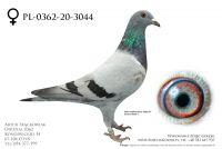 PL-0362-20-3044 - prawdopodobnie samica