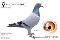 PL-0362-20-3050 - Ebben, Schaerlackens, Geerinckx