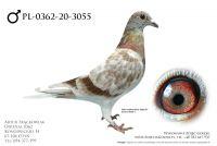 PL-0362-20-3055 - prawdopodobnie samiec