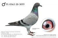 PL-0362-20-3059 - prawdopodobnie samczyk