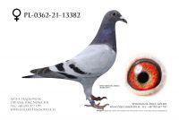 PL-0362-21-13382 - Linia Super Lotnika Van Loon