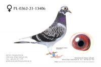 PL-0362-21-13406 - Abraham x Johan Donckers Top