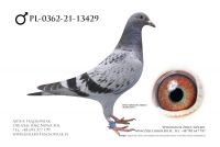 PL-0362-21-13429 - Linia 241 Super Ciemny Gaby Vandenabele !!!