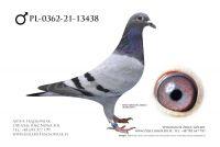 PL-0362-21-13438 - Inbred Exteem Marcel Wouters