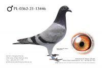 PL-0362-21-13446 - Linia Henrii Vloemans