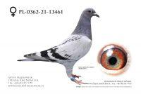 PL-0362-21-13461 - Wnuk trzech Olimpijczyków Kurt Gensheimer !!!