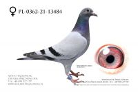 PL-0362-21-13484 - Linia Olympik Den AD i Wittenbuik 1432 Gaby Vandenabeele