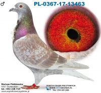 Pl-0367-17-13463-Daleki dystans