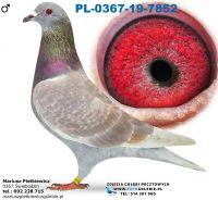 Pl-0367-19-7852-Daleki dystans