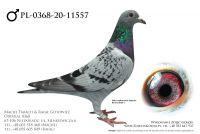 PL-0368-20-11557 - prawdopodobnie samczyk