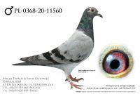 PL-0368-20-11560 - prawdopodobnie samczyk