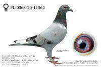 PL-0368-20-11562 - prawdopodobnie samiczka