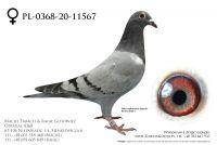 PL-0368-20-11567 - prawdopodobnie samiczka