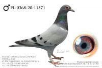 PL-0368-20-11571 - prawdopodobnie samczyk