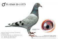 PL-0368-20-11575 - prawdopodobnie samczyk