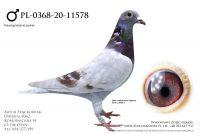 PL-0368-20-11578 - Prange, Doll, Schaerlackens
