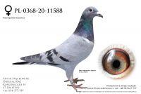 PL-0368-20-11588 - super lotniki w rodowodzie