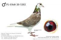 PL-0368-20-5202 - prawdopodobnie samczyk