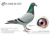 PL-0368-20-5257 - prawdopodobnie samczyk