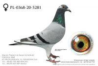 PL-0368-20-5281 - prawdopodobnie samiczka