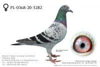 PL-0368-20-5282 - prawdopodobnie samiczka