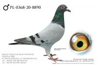 PL-0368-20-8890 - prawdopodobnie samczyk