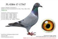 PL-0384-17-17547