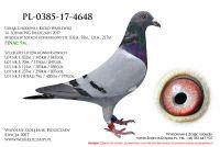 PL-0385-17-4648