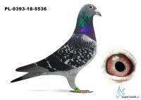 PL-0393-18-5536