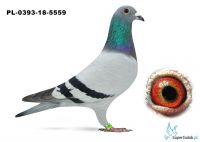 PL-0393-18-5559