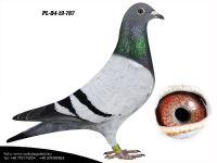 PL-04-19-787