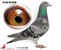 PL-04-20-6270