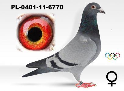 PL-0401-11-6770