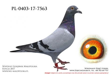 PL-0403-17-7563