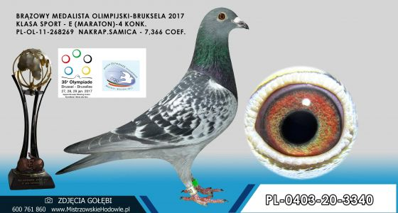 PL-0403-20-3340- Córka brązowej medalistki z Olimpiady Bruksela kat M