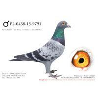 PL-0438-15-9791, z hodowli Karol Gardulski, 100% De Klak
